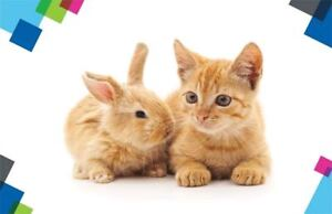 WANT: Kitten/young cat