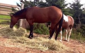 Beautiful Mare looking for a forever home!