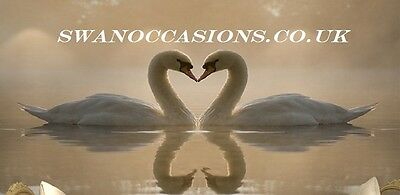 Swan Occasions