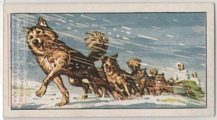 Siberian Husky Dogs Pulling Sled Sledge Winter Transport Vintage Trade Ad Card