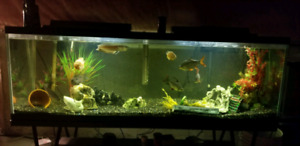 130 g rank filter heater and gravel