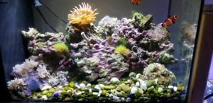 Aquarium eau salee
