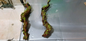 """8-10"""" driftwood with plants growing on it"""
