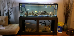 Large 150 Gallon Aquarium For Sale