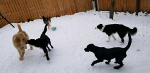 Professional Experienced Dog Sitter / Daycare & Boarding