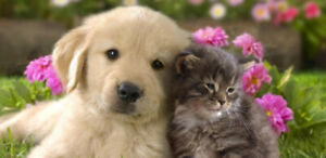 Pet sitter/Animal lover /check on your animal while you are away