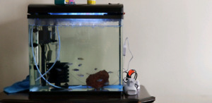 20 gallon fish tank with,african cichlids