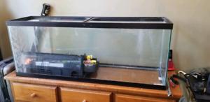 60 Gallon Glass tank