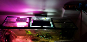 NEED GONE TODAY full setup 6 foot long 135 gal aquarium w/fish
