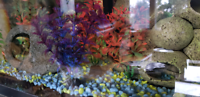 Fishes and fish tank decorations to give away