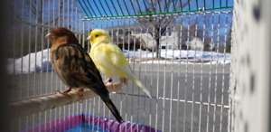 Canary pair for rehomming