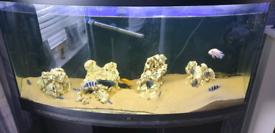 Jewel rio fish tank