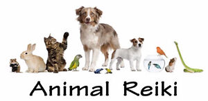 Animal Reiki Level 1 Certification