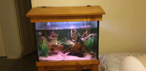 2ft Fish Tank with Stand, Hood, Light and Fish
