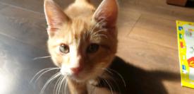Kitten boy last one still available