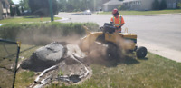 Quality Low Cost Stump Grinding and Stump Removal