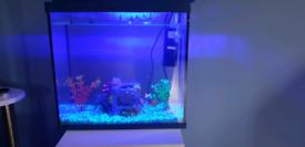 Fish tank set up and goldfish
