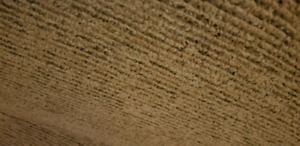 large area rug 8 by 10