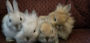 Baby bunnies ready to go