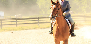 Gelding Available For Part Board
