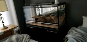 Custom Reptile Terrarium Aquarium Tank 4ft paid $1200