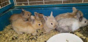 Selling bunnies