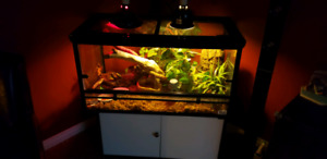 2 Crested Gekos and enclosure