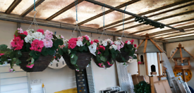 Artificial geranium hanging baskets, great quality plants,