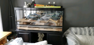 Reptile aquarium tank habitat custom paid over $2000