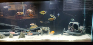 WANTED: Cichlids