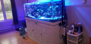 180 gallon saltwater aquarium
