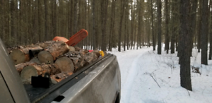 Guy and His Saw Acreage Tree Cutting Service