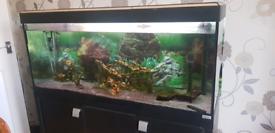 Fluval aquarium with cabinet and fish