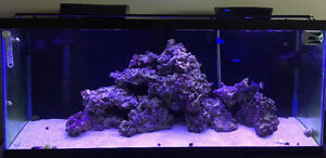 55gal. All-in-one saltwater setup
