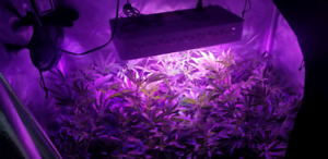 Kit Horticulture 1000watts complet avec tente