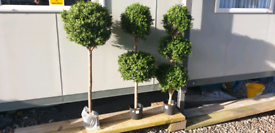 Single twin and triple ball artificial outdoor trees