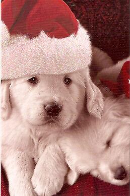 Golden Retriever Glittery Santa Christmas Cards - Box of 14