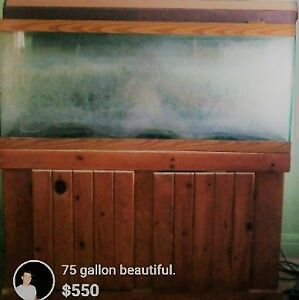 Beautiful 75 gallon tank