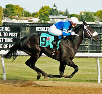 STALL CLEANER: ASSINIBOIA DOWNS RACETRACK