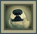 The Chubby Chickadee