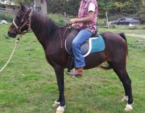 "Adult Female Horse - Pony: ""Gem"""