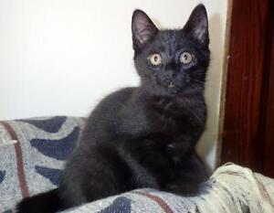 Black Cat Rescue Hamilton Ontario