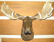 Taxidermy Head Mount
