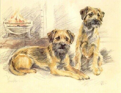 Border Terrier Limited Edition Art Print by UK Artist David Thompson*