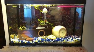 FOR SALE: 10 Gal tank with Accessories and Shirley (male Betta)