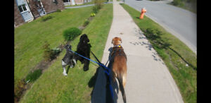 Brianne Manuel's Pet Sitting and Dog Walking