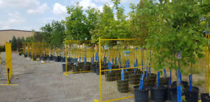 Evergreens, Perennials, Annuals, Shrubs, Vines plants for sale!!
