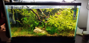 Beautiful 10 gallon planted aquarium with 9 fish and 4 snails