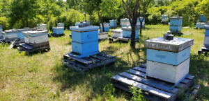 Bees Hives/Bees equipment for Sale.