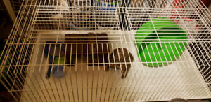 """Large small animal cage.20.5"""" x 39""""or sweet hedgehog passed away"""